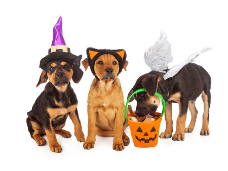 Three puppies wearing Halloween costumes with a pumpkin bucket filled with treats.