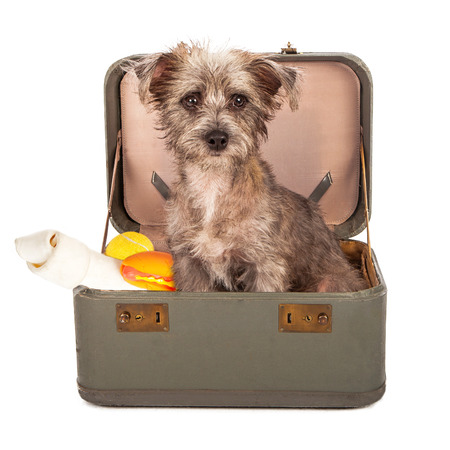 A small breed dog in a travel case packed with bones and toys ready to go on a trip photo