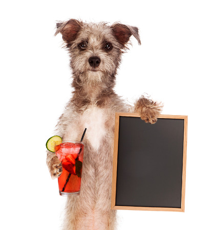 Terrier dog against a white backdrop holding a blank chalk board sign and a cocktail