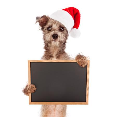 dog christmas: dog against a white backdrop Stock Photo