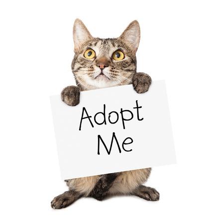 かわいい茶色および黒い縞模様の猫言葉で白い段ボール符号を保持して私はそれを採用します。 写真素材