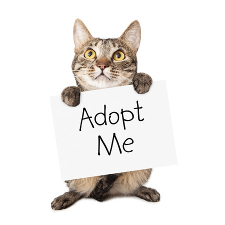 A cute brown and black striped cat holding up a white cardboard sign with the words Adopt Me on it Stock Photo