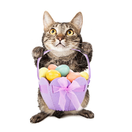 A cute tabby cat sitting up while holding a purple easter basket containing pastel color eggs photo