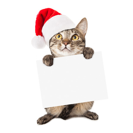 A cute brown and black striped cat wearing a red santa hat holding up a blank white cardboard sign for you to enter your holiday message onto photo
