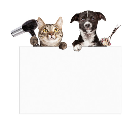 pet services: A cat holding a hair dryer and a dog holding cutting shears while hanging over a blank sign that is ready for you to enter your grooming service message on