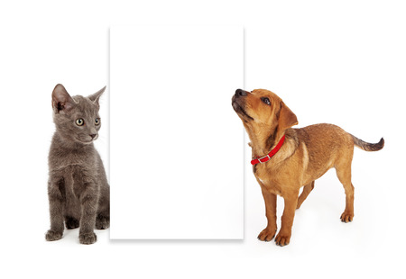 A young kitten and puppy sitting to the side of a blank white sign. Add your own advertising message to the board.