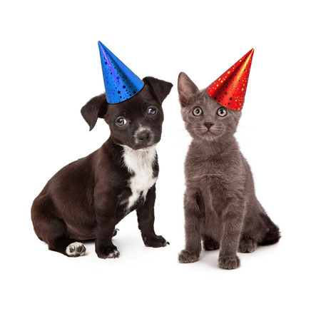 birthday hat: Black and white puppy and a gray kitten sitting together wearing festive party hats