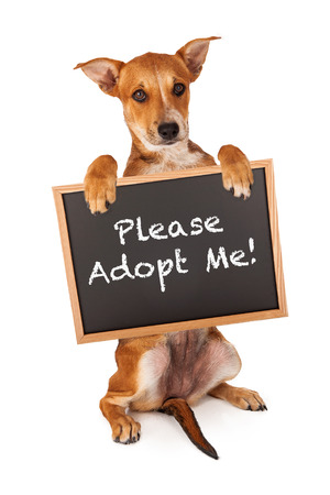 A cute crossbreed puppy holding a sign that says Please Adopt Me photo