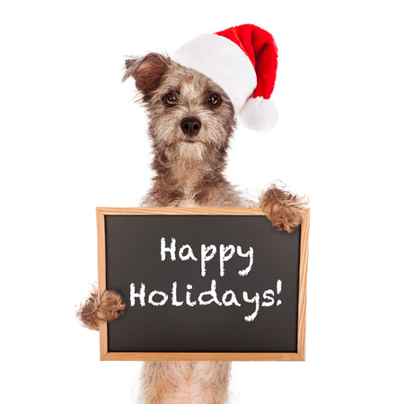 santa cap: Terrier dog standing against a white backdrop holding a chalkboard sign saying Happy Holidays