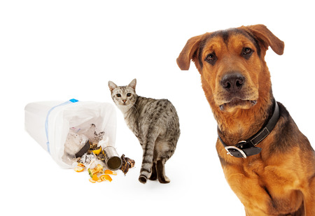 A closeup of an adult large breed dog that is coming out from the corner of the image with a cat getting into the trash and looking at him Stock Photo