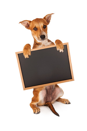 A cute yellow mixed breed puppy sitting up and holding a blank chalk board. Use chalk font to add your message photo