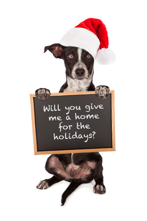A puppy dog sitting up and holding a sign asking for a home for Christmas
