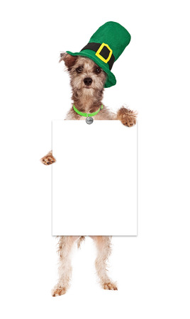 A cute terrier crossbreed dog wearing a green Irish hat standing up and holding a blank white sign for you to enter your marketing message onto photo