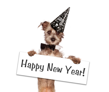 A cute young terrier mixed breed puppy dog against a white backdrop wearing a party hat holding a Happy New Year sign