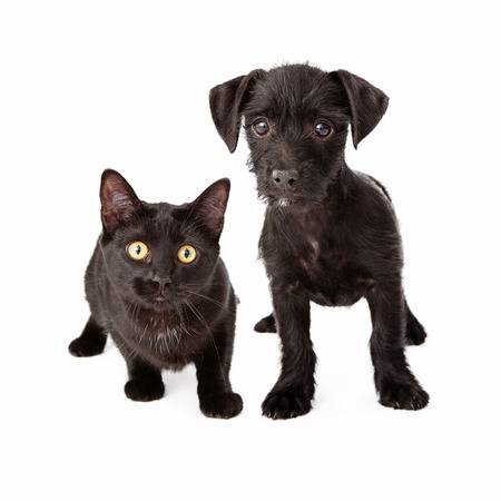 A scruffy black puppy standing next to a young black cat. Both animals are looking at the camera. photo