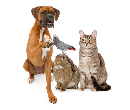 A goup of domestic animals consisting of a Boxer dog holding a lizard, a bunny rabbit with a parrot on his head and a gray striped tabby cat