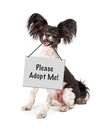 A cute happy little Papillon dog sitting and holding a sign that says Please Adopt Me. photo