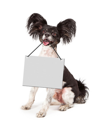A cute happy little Papillon dog sitting with a blank sign hanging from his mouth for you to enter your marketing text onto photo