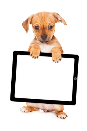 breed: A cute young mixed small breed puppy standing up and holding a blank computer tablet device