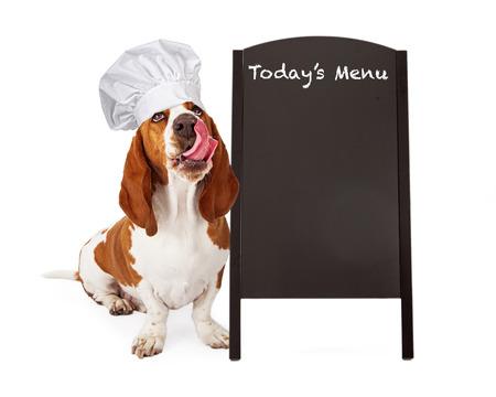 Un chien mignon Basset Hound portant un chapeau de chef tout en regardant vers le haut et en tirant la langue pour lécher ses lèvres après avoir mangé une friandise