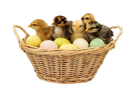 A wicker basket filled with colorful pastel Easter eggs and newborn chicks