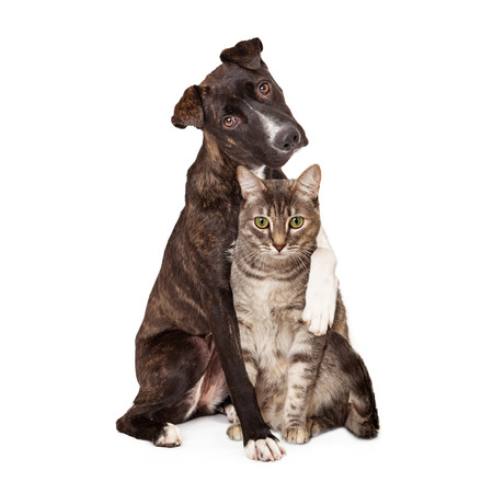 A pretty brindle coated Mountain Cur dog sitting next to a pretty tabby cat with his arm around her and paw resting on her shoulder
