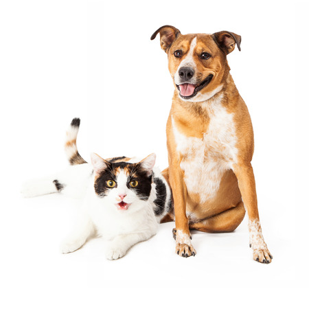 smiling cat: Happy and smiling mixed breed dog and calico cat sitting together