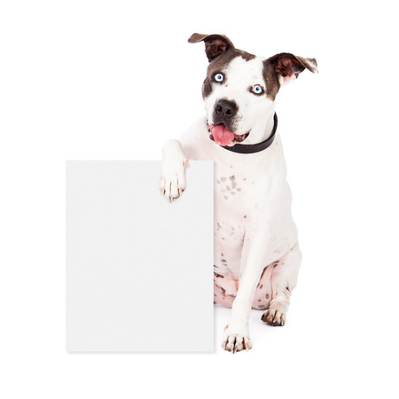 adopting: A happy Pit Bull dog holding a blank sign for you to enter your marketing message onto