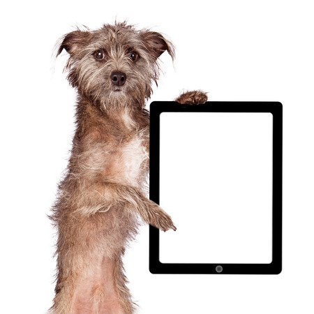 blank tablet: A cute scruffy Terrier mixed breed dog standing up and holding a handheld tablet device with a blank display to add your marketing message to.