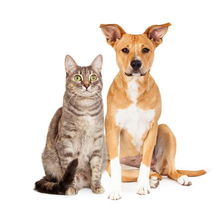 Een schattige gele en witte hond en een bruine tabby kat zitten bij elkaar