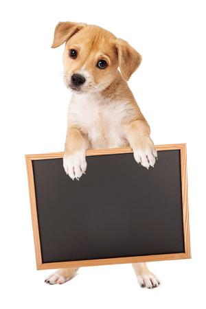držení: Roztomilý smíšené retriever smíšené plemeno psa ve stoje a drží prázdný znak pro zadání své marketingové zprávy na