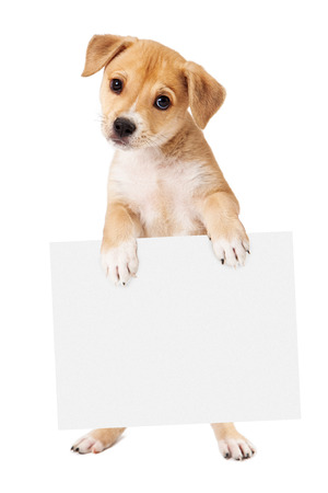 A cute mixed retriever mixed breed dog standing up and holding a blank sign for you to enter your marketing message onto