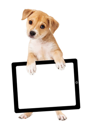 blank tablet: A cute mixed retriever mixed breed dog standing up and holding a blank sign for you to enter your marketing message onto