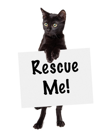 adopt: Black Kitten standing holding rescue me sign looking off to the side