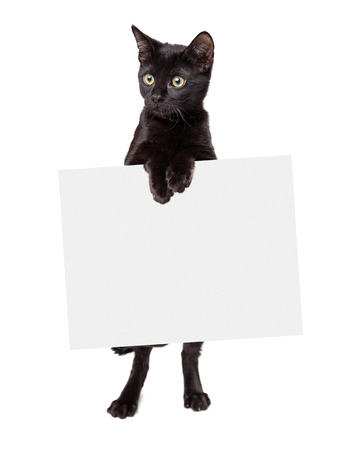 begging: Black kitten standing holding blank sign looking off to the side