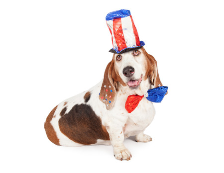 hounds: A cute and happy Basset Hound dog wearing a red, white and blue tall sequin hat and bow tie for the 4th of July American holiday