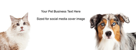 長髪の猫とオーストラリアン ・ シェパードのクローズ アップ。画像はソーシャル メディア タイムラインのカバーのプレース ホルダーのサイズに