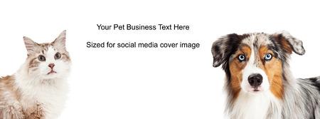 Longhair kat en Australian Shepherd close-ups. Afbeelding bijgesneden tot de grootte van een social media tijdlijn deksel placeholder