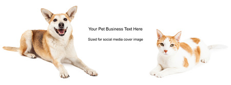 Shiba Inu mixed breed dog and domestic shorthair cat. Image cropped to the size of a social media timeline cover placeholder Stock Photo