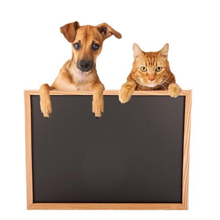 Een leuke hond en kat opknoping over een leeg wit bord voor u om uw bericht op te voeren