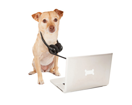 A cute Chihuahua and terrier crossbreed dog with a telephone headset sitting next to a computer with a bone emblem photo