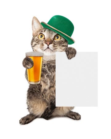 A cute cat wearing a St Patricks Day hat holding a beer and blank sign photo