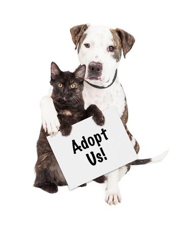 私、採用を保持している子猫の周り彼の腕を持つかわいいピット ・ ブル犬 写真素材