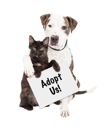 A cute Pit Bull dog with his arm around a kitten holding an Adopt Me sign