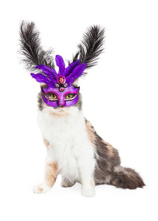 calico cat: A beautiful Calico cat wearing a purple Mardi Gras feather mask