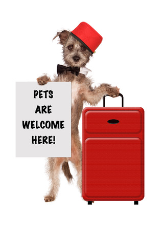 bellhop: A cute dog dressed as a hotel bellhop with a red suitcase holding a sign saying Pets Are Welcome Here Stock Photo
