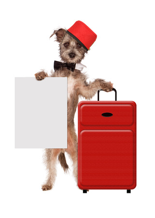 bellhop: A cute dog dressed as a hotel bellhop with a red suitcase holding a sign Stock Photo