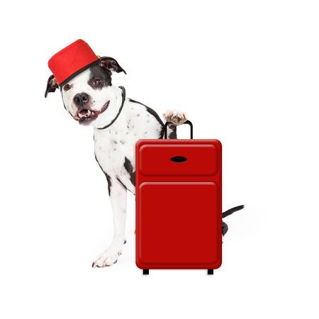 bellhop: Un perro lindo y agradable vestido como un botones de hotel con una maleta roja