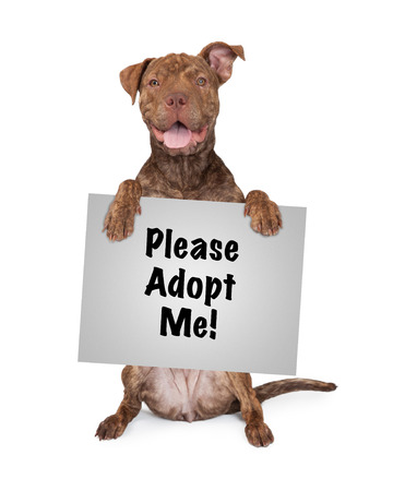 five month old: Five month old Pit Bull and Shar Pei mixed breed dog sitting up and holding a sign saying Please Adopt Me