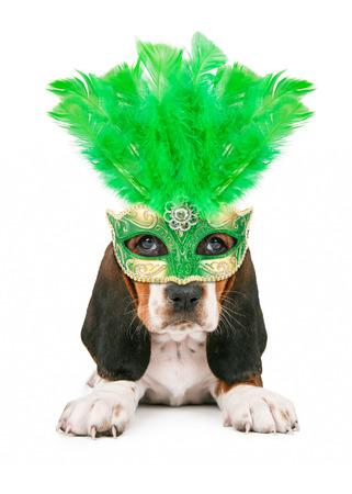 녹색 깃털 마디 그라 마스크를 쓰고 귀여운 작은 바셋 하운드 강아지